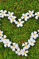 Preview iPhone wallpaper Plumeria, flowers, love heart, grass