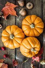 Preview iPhone wallpaper Pumpkin, acorns, still life
