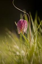 Preview iPhone wallpaper Purple flower, grass