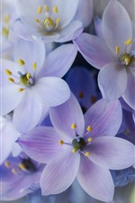 Preview iPhone wallpaper Purple flowers, inflorescence