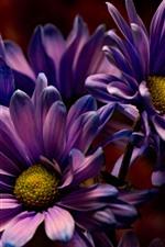 iPhone обои Фиолетовые цветы, лепестки, макрофотография, темнота