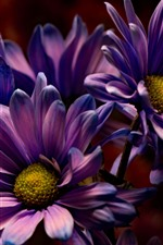 Preview iPhone wallpaper Purple flowers, petals, macro photography, darkness