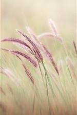 Preview iPhone wallpaper Purple grass, hazy