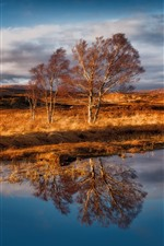 Rannoch Moor, Scotland, trees, grass, water reflection