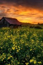 iPhone壁紙のプレビュー 菜の花の畑、小屋、夕日