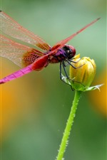 Preview iPhone wallpaper Red dragonfly, yellow flower