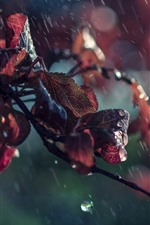 Preview iPhone wallpaper Red leaves in rain