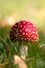 Preview iPhone wallpaper Red mushroom, grass, hazy