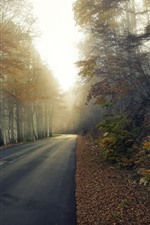 Vorschau des iPhone Hintergrundbilder Straße, Bäume, Herbst, Morgen, Nebel