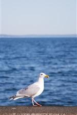 미리보기 iPhone 배경 화면 갈매기, 바다, 새
