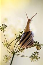 Preview iPhone wallpaper Snail, grass