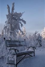 Snow, bench, trees, winter