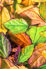 Preview iPhone wallpaper Some leaves, green, yellow, red