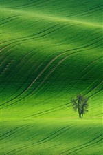 Preview iPhone wallpaper Spring, green fields, trees