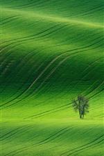 미리보기 iPhone 배경 화면 봄, 초록, 들판