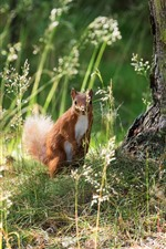 Preview iPhone wallpaper Squirrel, ground, grass, trees