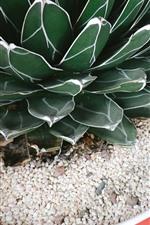 Preview iPhone wallpaper Succulent plants, vase, stones