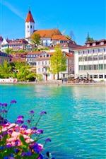Suíça, thun, rio, cidade, cisne
