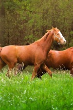 Preview iPhone wallpaper Three brown horses walk in the grass