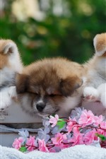 Preview iPhone wallpaper Three cute puppies, flowers
