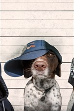 Preview iPhone wallpaper Three dogs criminals, cap, funny animals