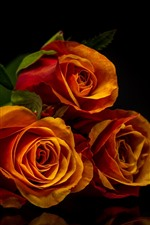 Preview iPhone wallpaper Three orange roses, black background