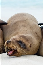 Preview iPhone wallpaper Three sea lions