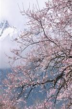iPhone壁紙のプレビュー チベットボミ、雪解け、桃の花の花