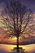 Preview iPhone wallpaper Trees, bench, snow, sunset, winter