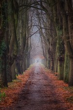 Preview iPhone wallpaper Trees, path, fog, morning, nature