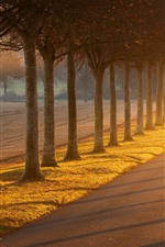 Preview iPhone wallpaper Trees, road, sunshine, fog, morning