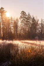 Preview iPhone wallpaper Trees, sunshine, lake, hut, morning, fog