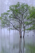 Preview iPhone wallpaper Trees, water, hazy, spring