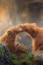 Dois, marrom, ursos, pedras