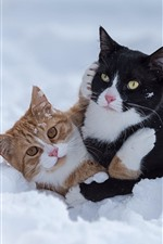 Preview iPhone wallpaper Two cats play game in snow