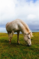 Preview iPhone wallpaper Two horses, grazing, grass, sea, Iceland