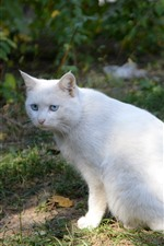 Preview iPhone wallpaper White cat sit on ground, sunshine