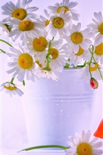 Preview iPhone wallpaper White chamomile flowers, bouquet, water droplets