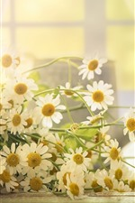 Preview iPhone wallpaper White chamomile flowers, light, hazy