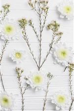 White chrysanthemum, wood board