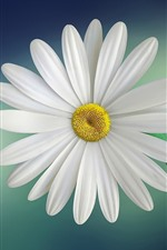 Preview iPhone wallpaper White daisy, petals, blue background