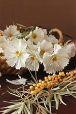 White kosmeya flowers and sea buckthorn