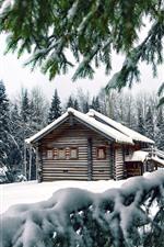 Winter, snow, pine trees, wood house