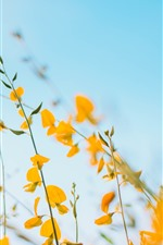 Preview iPhone wallpaper Yellow flowers, blue sky background