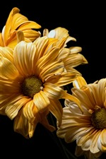 Preview iPhone wallpaper Yellow flowers close-up, black background