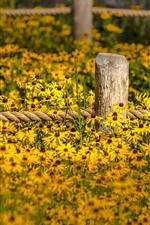 Yellow flowers, fence, garden