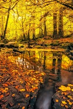 Preview iPhone wallpaper Autumn, forest, puddle, rocks, golden