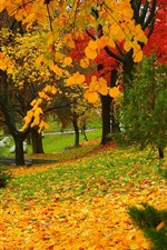 Preview iPhone wallpaper Autumn, park, trees, yellow and red leaves