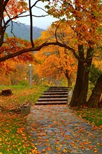 Preview iPhone wallpaper Autumn, trees, park, path, lamps