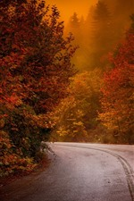 Preview iPhone wallpaper Autumn, trees, road, fog, morning